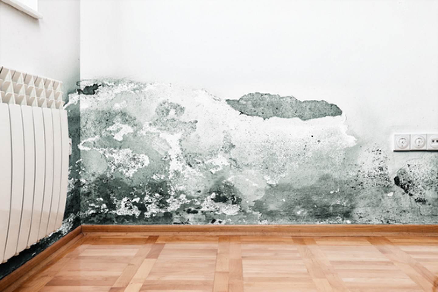 Is Mold Threatening Your Home?